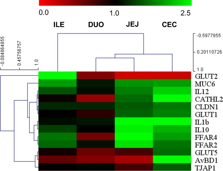 A heat map of hierarchically clustered gene expression in different segments of intestinal mucosa in chicken treated with GOS in ovo . Intestinal segments: DUO–duodenum, JEJ–jejunum, ILE–ileum, and CEC–caecum. In ovo injection was carried out on day 12 of egg incubation. Intestinal samples (n = 10) collected from chickens on day 42 post-hatching. RT-qPCR data were generated with custom-designed primers used for amplification with SYBR green dye; Glucose-6-phosphate dehydrogenase (G6PDH) and beta-actin (ACTB) were used as reference genes; relative gene expression (fold change) calculated as 2 –ΔΔCt . A Multiexperiment Viewer version 4.9 (MeV) was used for constructing a Hierarchical Cluster Tree based on fold change. Colours (red-black-green) show relative gene expression changes in GOS vs. C (red: down-regulated, green: up-regulated genes).