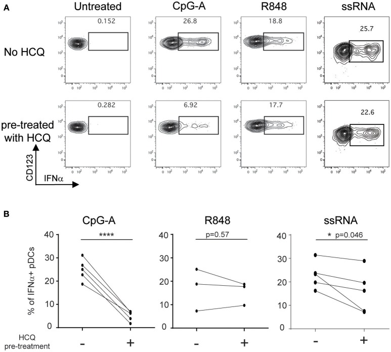 HCQ-mediated inhibition of IFNα production from pDCs in response to CpG-A and ssRNA, but not to R848, can be detected after isolation of PBMC from whole blood pre-treated with HCQ. Whole blood samples from healthy donors were treated with HCQ (1000 ng/ml) or not for 1 h prior to PBMC isolation and then stimulated with CpG-A (10 μM), R848 (1 μM) or ssRNA (4 μg/ml) for 6h. IFNα was analyzed by intracellular cytokine staining. (A) Representative dot plots of IFNα+ cells within a BDCA4+ and CD123+ gate. (B) Percentages of IFNα-producing pDCs detected as shown in A ) after CpG-A stimulation ( n = 5 donors), R848 stimulation ( n = 3 donors), or ssRNA ( n = 5 donors) from PBMC isolated from whole blood pre-treated with HCQ or not. Statistical significance was assessed using two-tailed paired Student's t-test (* p