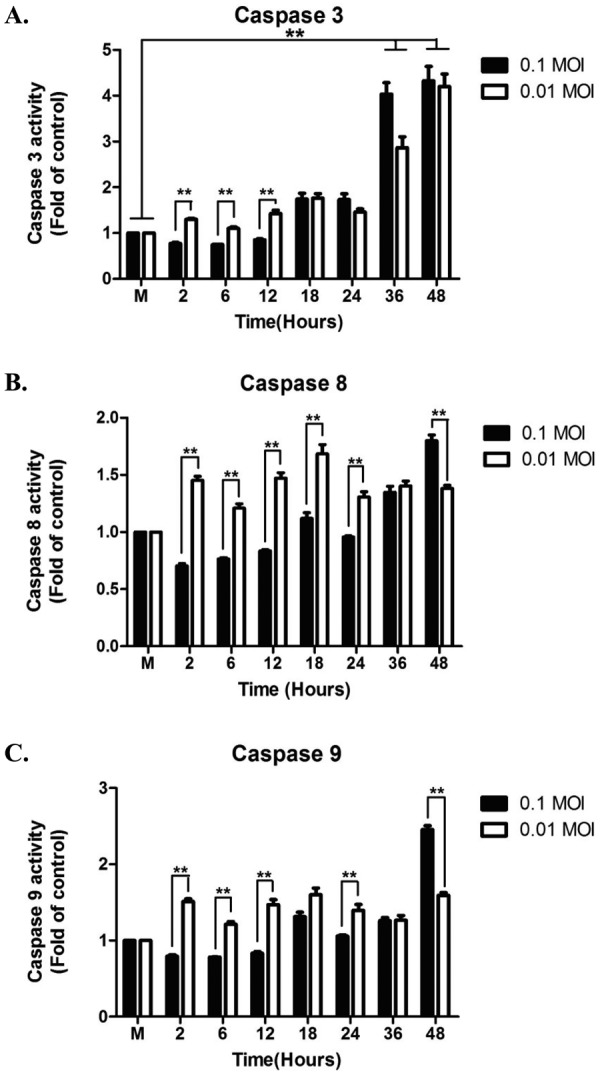 Effects of SBV infection on activation of caspase-3, -8 and -9 in Vero cells. Activation of caspases are detected by using colorimetric kits. Samples were collected at 2, 6, 12, 18, 24, 36, 48 hr post-infection. Results are calculated as the mean ± SEM versus mock infected group. Asterisk indicates statistically significance ( P