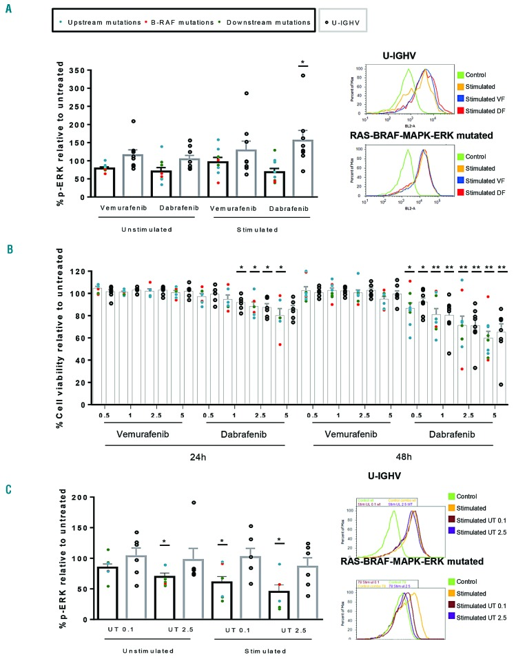 Effect of RAS-BRAF-MAPK-ERK inhibitors in cases of RAS-BRAF-MAPK-ERK-mutated and unmutated IGHV chronic lymphocytic leukemia. (A) Cells from 17 cases of chronic lymphocytic leukemia (CLL), nine containing mutations in the RAS-BRAF-MAPK-ERK pathway ( KITLG , PTPN11 , KRAS , BRAF , MAPK1 , MAP2K1 , MAP2K2 ) and eight with unmutated IGHV genes (U-IGHV) with no alterations in genes of the RAS-BRAF-MAPK-ERK pathway were treated with vemurafenib 2.5 μM or dabrafenib 2.5 μM. p-ERK levels were analyzed by flow cytometry after 1.5 h of treatment and expressed relative to untreated cells (Ct) at basal levels (unstimulated) or after stimulation with anti-IgM (stimulated) (* P