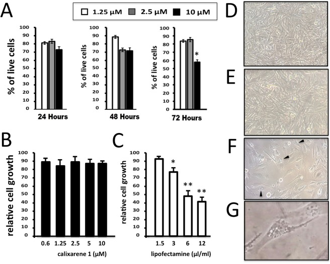 Effects of calixarene 1 on viability, cell proliferation and morphology of U251 cells. ( A ) Viability profile in U251 cells was reported for three incremental concentrations of 1 : 1.25 µM (white bars), 2.5 µM (grey bars) and 10 µM (black bars). Three different time points: 24, 48 and 72 hours after the transfection were considered. ( B – G ) Comparison between the effects of calixarene 1 ( B , E ) and Lipofectamine RNAiMAX ( C , F , G ) on U251 cell growth ( B , C ) and morphology ( D – G ), determined after 72 hours cell culture. D = control untreated U251 cells. Appearance of vacuolization and methuosis-like patterns are underlined by the arrowheads shown in panel F (representative example in the panel G).