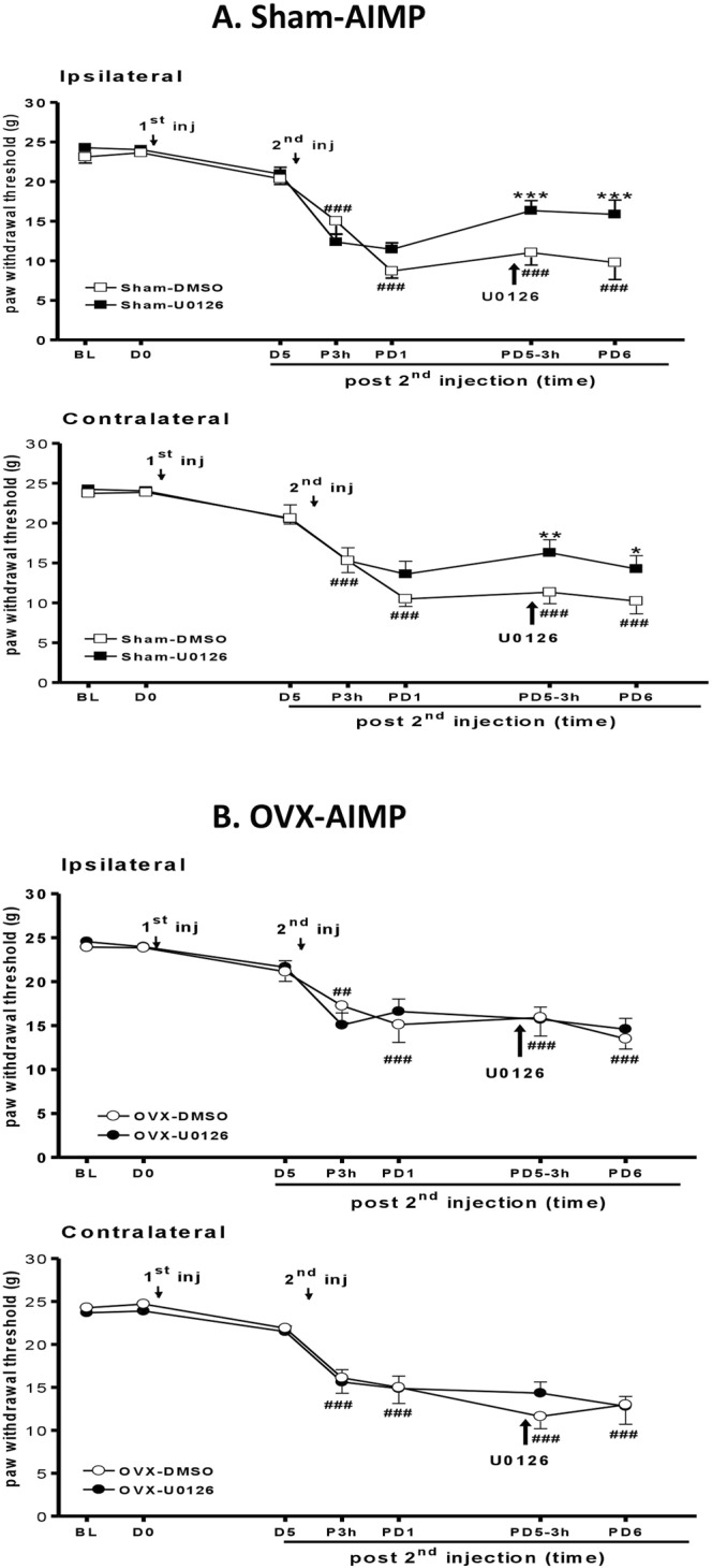 U0126 reversed acid-induced mechanical allodynia in the sham but not OVX rats. ( A ) Intrathecal (i.t.) injection of the ERK inhibitor U0126 (10 μg in 20 μL 5% DMSO) in the ovary-intact (Sham) rats on day 5 after the 2nd AI (PD5) attenuated mechanical allodynia at 3 h and the next day (PD6). This effect was not detected in vehicle-treated rats (Sham-DMSO). ( B ) No difference was observed in OVX rats with i.t. U0126 or vehicle injection. BL, before 1st injection; PD1, day 1 post 2nd AI; PD5-3 h, 3 h post U0126/or vehicle injection; PD6, day 6 post 2nd AI. ## p