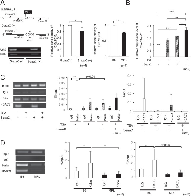 Kaiso binding to mCGCG motif located in Ctse intron 1 and HDAC3 (Histone deacetylase 3) in CD4+ T cells from MRL mice. ( A ) Methylation specific PCR analysis in EL4 cells treated with or without 1 μM of 5-azaC, and CD4+ T cells derived from B6 and MRL mice. Methylation-sensitive restriction enzyme Acc II digests unmethylated CGCG motifs, while methylated CGCG is resistant to Acc II. The genomic DNAs were digested with Acc II, amplified by PCR using primer sets; Primer F2/R2 and Primer F2/R3. The densitometry intensity ratios of PCR products (F2R2/F2R3) are shown. *p