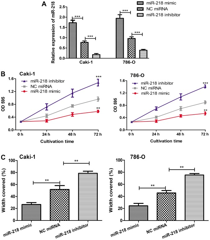 Influence of miR-218 on tumor cell proliferation and migration. (A) Alteration of the miR-218 expression levels in Caki-1 and 786-O cell lines by transfection with miR-218 mimic, miR-218 inhibitor or NC miRNA. ***P