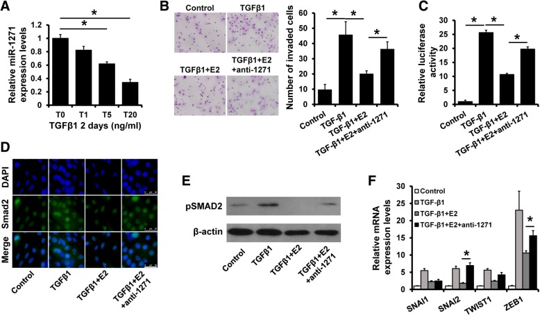 Estrogen reverses TGF-β-induced EMT in a miR-1271 dependent manner. a The expression of miR-1271 in T47D cells after treatment with TGF-β1 at indicated concentration. b Transwell invasion assay of miR-1271-depleted T47D or control cells with TGF-β1 or/and E2 treatment. c Luciferase reporter analysis of TGF-β signaling activity in cells as in (B). d Localization of SMAD2 in cells as in (B) as determined by immunofluorescence staining. e The expression of pSMAD2 in cells as in (A) by western blotting. f The expression of SNAI1/2, TWIST1 and ZEB1 in cells as in (A) as determined by RT-qPCR. * P