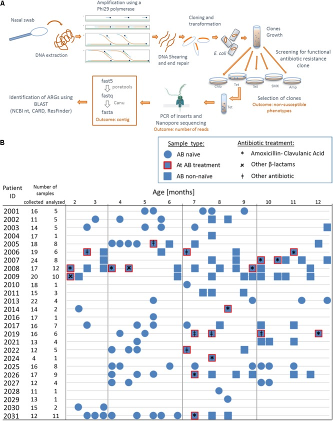 Overview of the functional metagenomic approach, samples collection and patient history with antibiotic therapy. (A) Schematic representation of the experimental workflow. (B) We used 130 nasal swabs from 26 infants with CF enrolled in a cohort study. We chose samples containing a decent amount bacterial DNA (≥40 ng/μL 16S rRNA PCR product) for functional metagenomic analysis. Samples are represented according to patient antibiotic history at the time of sampling; circles: antibiotic naïve, squares with red border: during an antibiotic treatment and squares: after one or more antibiotic therapy.
