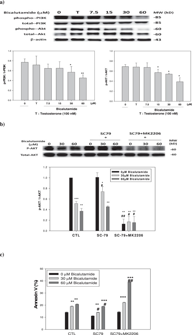 Expression of signaling proteins and Annexin V% affected by testosterone and bicalutamide. ( a ) PI3K and Akt proteins. ( b ) The expression of p-Akt and total Akt when treated as indicated. ( c ) Apoptotic effect of SC79 and a combination of SC79 plus MK2206. The dose(s) used were: testosterone (T) 100 nM; bicalutamide (7.5, 15, 30 and 60 μM); SC79 10 μM, and MK2206 1 μM. Triplicate experiments were statistically treated. Data expressed in mean ± S.D. (n = 3).