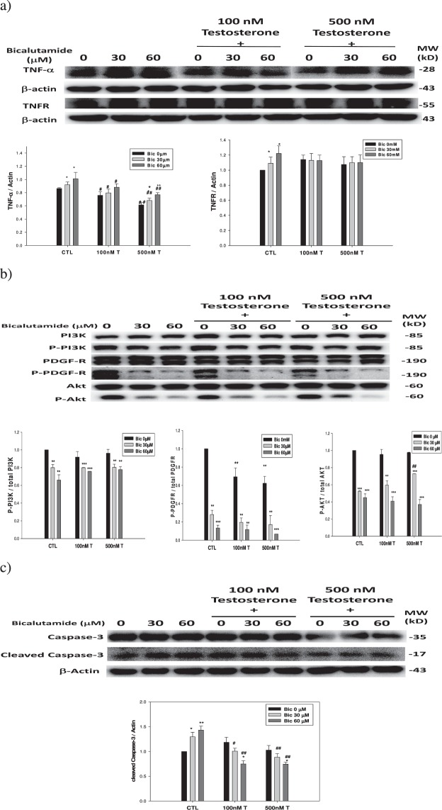 Dose dependent effect of co-treatment with testosterone and bicalutamide on the survival and apoptotic pathways in the RMC cells. ( a ) TNF-α and TNFR. ( b ) Total and phosphorated PI3K, PDGF-R, and Akt. ( c ) Caspase-3 and cleaved caspase-3. Experiment was performed in triplicate and statistically treated (n = 3). The symbol '*' compares within the same group; and '#' compares among groups. * p