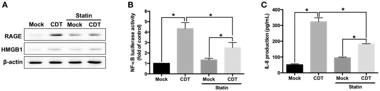 Disruption of lipid rafts decreases CDT-induced inflammatory response. (A) AGS cells were pretreated with or without 10 μM lovastatin for 1 h and exposed to 100 nM CDT for 24 h. Cell lysates were analyzed by western blotting with the antibodies against RAGE, HMGB1, and β-actin, respectively. AGS cells were co-transfected with NF- κ B and pGL3 luciferase reporters in the absence or presence of 10 μM lovastatin before treatment of 100 nM CDT for 24 h. Cell lysates were used to analyze (B) NF- κ B promoter activity and normalized by pGL3 luciferase activity. (C) Cell supernatants were subjected to ELISA for the quantification of IL-8 production. The data are presented as means ± standard deviations for three independent experiments. Statistical analysis was calculated using ANOVA analysis and Tukey's test. * P