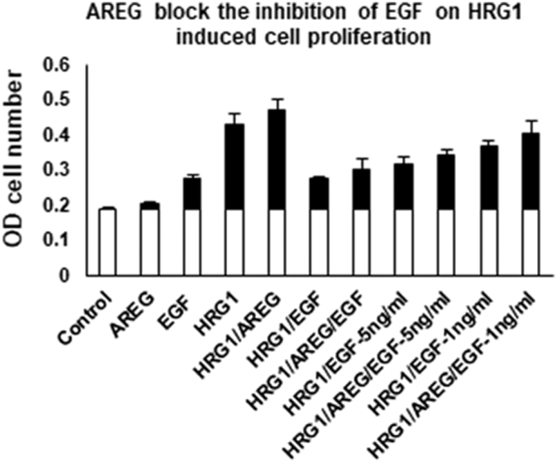 AREG blocks the inhibition of EGF on HRG1 induced cell proliferation: EGFR-ErbB3–expressing cells were seeded in 96-well plates and treated with different concentration of ligands for 72 hours. All concentrations of ligands were 20n g/ml except those that were specifically labeled for EGF. The relative cell number was determined with a CCK8. The OD value at 450 nm was measured to show the effect of the ratio of EGF/AREG on HRG1-induced cell proliferation. Data are plotted as mean ± SD of tetraplicates. The data are representative of three independent experiments.
