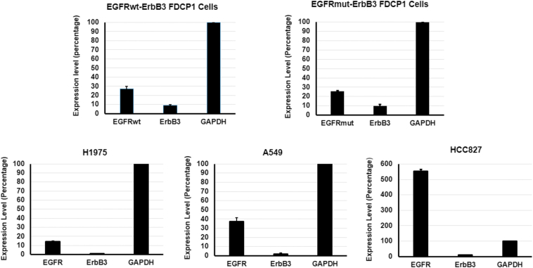 Comparison of expression level of EGFR and ErbB3 on EGFR-ErbB3 expressing FDC-P1 cells and NSCLC cell lines. Real-time PCR was performed with 200 ng of RNA with an iTaq Universal SYBR One-Step Kit. Fold expression was calculated as relative fold expression = 2 cq value of GAPDH-cq value of receptors . Data are plotted as mean ± SD of triplicates.