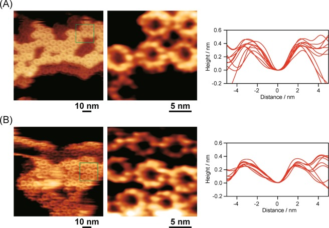 FM-AFM images of native LH2 ( A ) and oxidized LH2 ( B ) adsorbed on mica taken in 20 mM Tris buffer containing 150 mM NaCl (pH 8.0). Left: wide images. Middle: locally enlarged images of single LH2 proteins. Right: overlapped height-profiles of ten proteins.