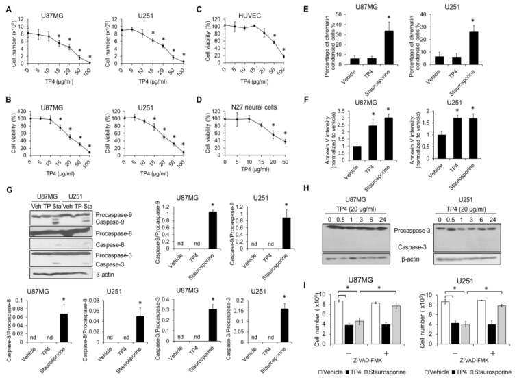 Caspase-mediated cell death is not induced by tilapia piscidin (TP) 4. U87MG (wild-type p53 ) and U251 (mutant p53 ) cells were treated with different doses of TP4 (0, 5, 10, 15, 20, 50, and 100 μg/mL) for 24 h. Cell number ( A ) and cell viability ( B ) were assessed. Cell number was determined using the trypan exclusion assay. Cell viability was assessed using the 3-(4,5-dimethylthiazol-2-yl)-5-(3-carboxymethoxyphenyl)-2-(4-sulfophenyl)-2H-tetrazolium inner salt)/phenazine <t>methosulfate</t> <t>(MTS/PMS)</t> assay. Human umbilical vein endothelial cells (HUVECs) ( C ) and N27 rat neural precursor cells ( D ) were treated with indicated doses of TP4 for 24 h. Cell viability was assessed using MTS/PMS assay. U87MG and U251 cells were treated with TP4 (20 μg/mL) and staurosporine (1 μM) for 24 h and 6 h, respectively. Apoptosis was monitored by chromatin condensation ( E ), Annexin V binding ( F ), and caspase activation ( G ). Condensed nuclei were scored from 4′,6-diamidino-2-phenylindole (DAPI)-stained cells. Intensity of Annexin V-Fluorescein isothiocyanate (FITC) was measured by flow cytometry. Cell lysates were collected and immunoblotted with caspase-3, -8 and -9 antibodies. β-actin was used as a loading control. Right and bottom panel: ratio of cleaved caspase-3, -8, and -9 to procaspase-3, -8, and -9, respectively. Veh: vehicle; TP: TP4; Sta: staurosporine. ( H ) Cells were treated with TP4 (20 μg/mL) for different times. Cell lysates were immunoblotted with caspase-3 antibody. ( I ) Cells were preincubated with pan-caspase inhibitor Z-VAD fluoromethylketone (Z-VAD-FMK) (100 μM) for 1 h, followed by TP4 (20 μg/mL) and staurosporine treatment for 24 h and 6 h, respectively. Cell number was determined using the trypan exclusion assay. Vehicle: 0.5% dimethyl sulfoxide (DMSO). Western blotting experiments were performed at least three times with similar results. Band intensities were quantified with Image J software (1.51j8; NIH, Bethesda, MD, USA). * p