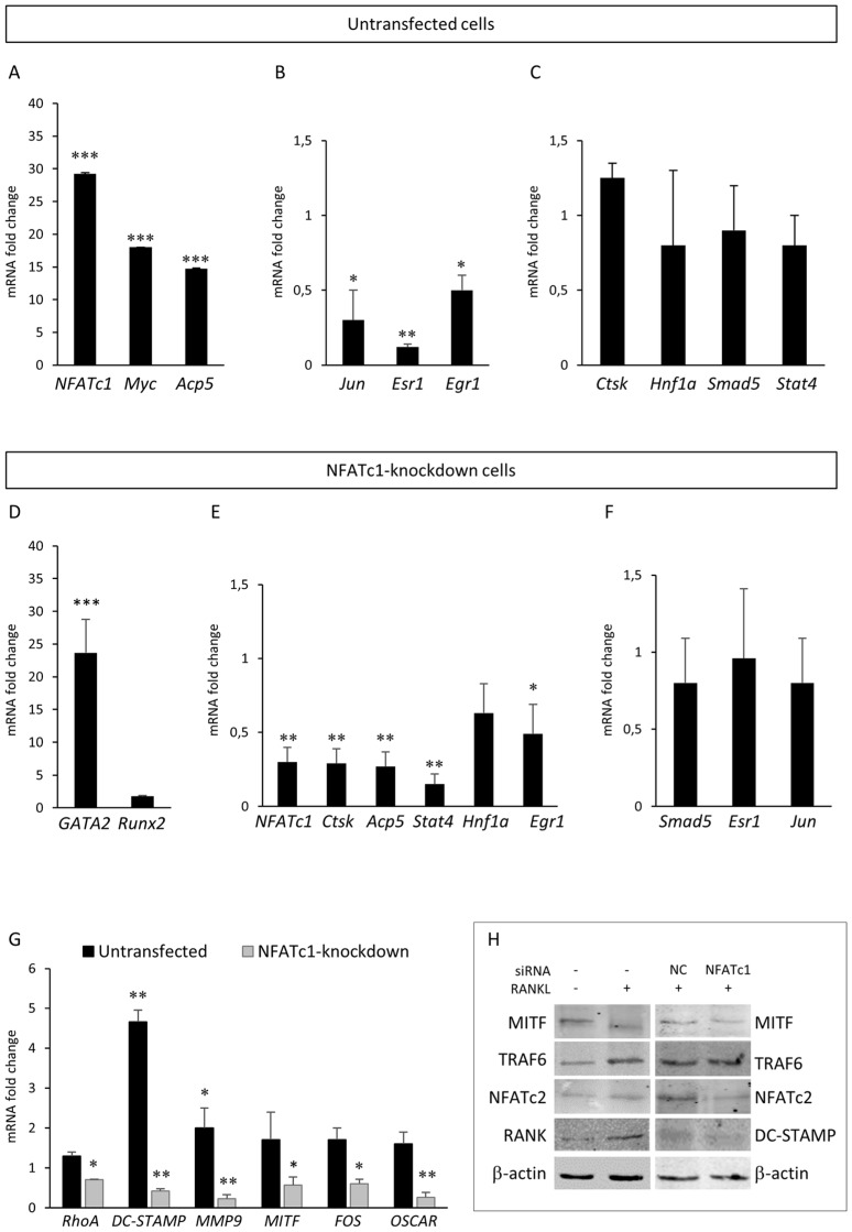 Effects of NFATc1 induction or depletion on different genes involved in the RANK–RANKL pathway. Cells were untransfected and RANKL-induced. QPCR results of ( A ) NFATc1, Myc and Acp5 ; ( B ) Jun, Esr1 and Egr 1; and ( C ) CtsK, Hnf1a, Smad5 and Stat4 . Cells were NFATc1-knockdown and RANKL-induced. QPCR results of ( D ) GATA2 and Runx2 ; ( E ) NFATc1, CtsK, Acp5, Stat4, Hnf1a and Egr1 ; ( F ) Smad5, Esr1 and Jun ; and ( G ) RhoA, DC-STAMP, MMP9, MITF, FOS and OSCAR . The mRNA expression levels were presented as relative values to those expressed in siRNA-NC transfected or untransfected cells arbitrarily set at 1.0. The results shown are the means ± SD of three experiments (each of which was performed in triplicate). * p