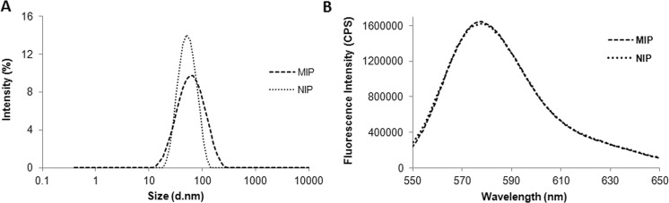 ( A ) Size distribution as measured by dynamic light scattering in 25 mM sodium phosphate buffer pH 7.0 and ( B ) fluorescence emission spectra (λ ex = 540 nm), of MIP-NPs and NIP-NPs in water.