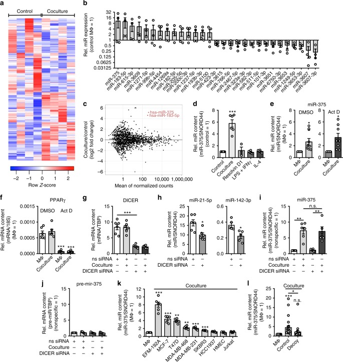 Coculture with breast cancer cells increases miR-375 in human MΦ. a – l Human PBMC-derived MΦ were used. a Heatmap of differentially expressed miRs from control and MΦ cocultured with MCF-7 cells ( n = 4). b Representative differentially expressed miRs in control MΦ vs. cocultured MΦ and c MA -plot. d MiR-375 abundance was measured in control, 48 h cocultured, polarized (LPS + IFNγ for 24 h, <t>IL-4</t> for 48 h) and resolution-phase (resolvin D1 for 6 h) MΦ via qPCR, and normalized to untreated MΦ ( n ≥ 3). e Primary human MΦ were treated for 3 h with actinomycin D (Act D) or a DMSO control. Cells were washed and cocultured with MCF-7 cells for 24 h. MiR-375 abundance was quantified via qPCR and normalized to MΦ control ( n = 8). f PPARgamma mRNA expression was measured as a positive control ( n ≥ 5). g – j MΦ were transfected with nonspecific control (ns siRNA) or DICER siRNA for 24 h and cocultured with MCF-7 cells for another 48 h ( n = 5–6). g DICER mRNA expression in MΦ. h Endogenous miR-21-5p and miR-142-3p were measured by qPCR as a control. i MiR-375 abundance and j pre-miR-375 expression were measured by qPCR in control and cocultured MΦ. k MΦ were cocultured with indicated cell lines for 24 h. MiR-375 levels were measured by qPCR and normalized to MΦ control ( n ≥ 5). l MΦ were cocultured with MCF-7 control (empty vector transfected) or decoy (miR-375 decoy transfected) cells for 24 h. MiR-375 expression was measured by qPCR and normalized to MΦ control ( n = 27) using different MCF-7 cell passages. Data of b and d – I are mean ± SEM and p -values were calculated using two-tailed Student's t -test ( d , f , g – k ) and one-sample t -test ( e , l ). * p
