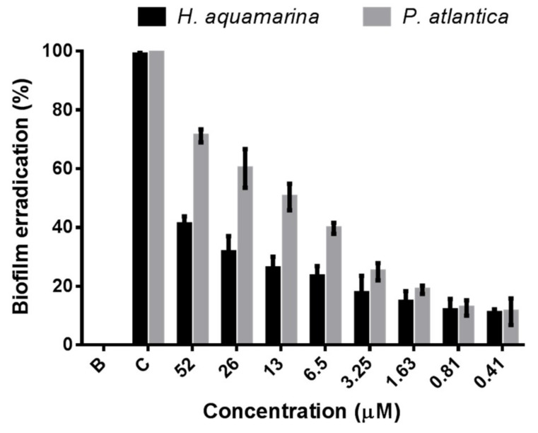 Antibiofilm dose–response activity of portoamides towards the marine bacteria Halomonas aquamarina and Pseudoalteromonas atlantica . B: 0.1% DMSO; C: 4:100 dilution of penicilin-streptomycin-neomycin stabilized solution (Sigma P4083).