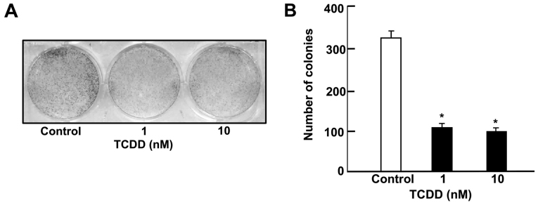 TCDD suppresses colony formation in RKO human colorectal cancer cells in vitro . Cells (1×10 3 cells/well) were seeded into 6-well plates and cultured in <t>Dulbecco's</t> modified <t>Eagle's</t> medium containing 10% fetal bovine serum, 1% penicillin/streptomycin and 1% fungizone in the presence of vehicle (1% dimethyl sulfoxide) or TCDD (1 or 10 nM) for 5 days when visible clones formed. The colonies were washed with PBS, fixed with methanol and then stained with 0.5% crystal violet. (A) Stained cells are presented as images (×10), and (B) the colonies containing > 50 cells were counted under a microscope. * P
