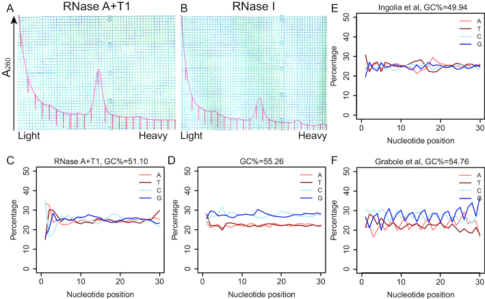 RPF GC content is <t>RNase-species</t> independent. ( A ) 3.8 A 260 homogenate from hippocampi of one P35 male mouse was digested with 100ng RNase A (Sigma, # R4875) + 60U <t>RNase</t> T1 (Thermo Fisher Scientific, #EN0542)/ A 260 , at 25°C for 30min and applied to a 10–50% (w/v) sucrose gradient. ( B ) 3.8 A 260 homogenate from hippocampi of one P35 mouse was digested with 5U RNase I (Ambion, #AM2294)/ A 260 , at 25°C for 45min and applied to a 10–50% (w/v) sucrose gradient. ( C ) Nucleotide composition at each position of RPFs mapped to CDS from ribosomes in (A). ( D ) Nucleotide composition at each position of RPFs mapped to CDS from ribosomes in (B). ( E ) Nucleotide composition at each position of RPFs mapped to CDS from mouse embryonic stem cells (mESCs) (data from Ingolia et al. ) ( 16 ). A 600 μl aliquot of lysate was treated with 15 μl RNase I at 100 U/μl for 45 min at 25°C. ( F ) Nucleotide composition at each position of RPFs mapped to CDS from human embryonic stem cell (hESC)-derived neurons (data from Grabole et al. ) ( 42 ). 5 U TruSeq Ribo Profile Nuclease/ A 260 at 25°C for 45 min.