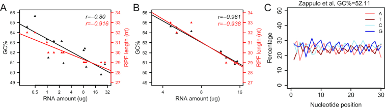 RPF GC content and length depend on the RNase digestion protocol. ( A ) Lysates from human iPSC neuron samples spanning a wide range of amounts were digested with 100 ng RNase A + 60U RNase T1/ A 260 at 25°C for 30 min. Monosomal RNA was extracted from monosomal fractions of sucrose gradients and quantified with Nanodrop. GC contents were calculated as in Figure 2A and the peaks of length distributions of RPFs mapped to CDS were also determined. Scatter plots with Pearson correlation coefficients show the negative correlation between 80S monosomal RNA amounts (log 2 scale) and the GC contents (black) or RPF lengths (red). ( B ) Lysates from human iPSC samples were digested with 20 ng RNase A + 12 U RNase T1/ A 260 at 25°C for 30 min. Scatter plots with Pearson correlation coefficients show the negative correlation between 80S monosomal RNA amounts (log 2 scale) and the GC contents (black) or RPF lengths (red). ( C ) Nucleotide composition at each position of RPFs mapped to CDS from mESC-derived neurons with an alternative protocol of RNase digestion (data from Zappulo et al. ) ( 43 ). 70 U RNase I at 25°C for 40 min.