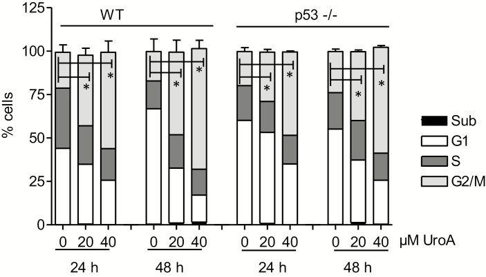 Urolithin A leads to accumulation of HCT116 cells in G 2 /M phase of the cell cycle. WT and p53−/− HCT 116 cells were treated with solvent (0.1% DMSO), 20 µM or 40 µM urolithin A for 24 and 48 h prior to PI staining of their nuclei and flow cytometric analysis of cell-cycle distribution. Bar graphs depict compiled data of three independent biological replicates. (mean ± SD, * P