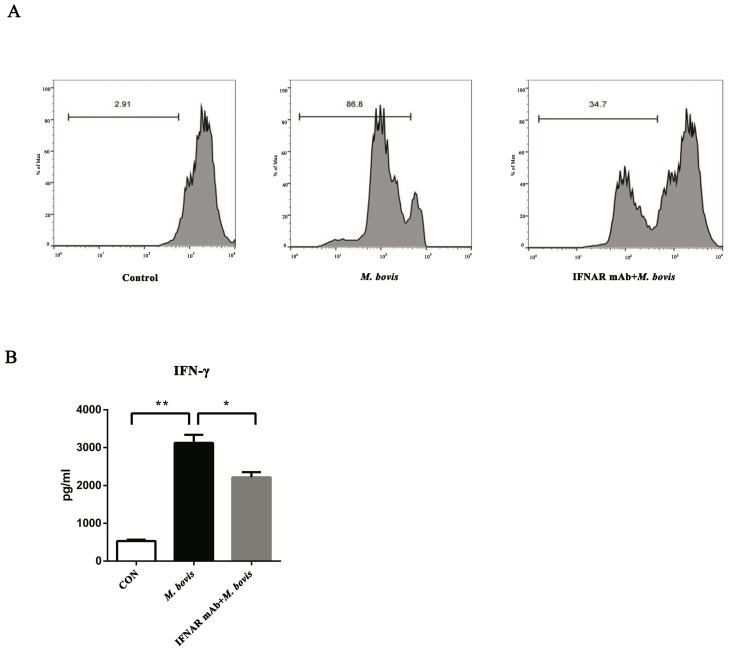 BMDCs promote T cell activity in the presence of type I interferons. ( A ) The proliferation of CD4 + T cells was analyzed by flow cytometry after 72 h co-culture. The interferon receptor was treated with neutralizing anti-mouse IFNAR mAb (10 ng/mL) to block and then infected for 24 h with M. bovis (MOI 5). CFSE-stained CD4 + T cells were co-cultured with three different BMDC groups, and the ratios of BMDC:T cells were 1:10 for 72 h. ( B ) After 72 h co-culture, the culture supernatants were harvested and assessed by ELISA. All data are expressed as mean ± SD. The number above the horizontal bar represents the proliferation rate of CD4 + T cell, (* p