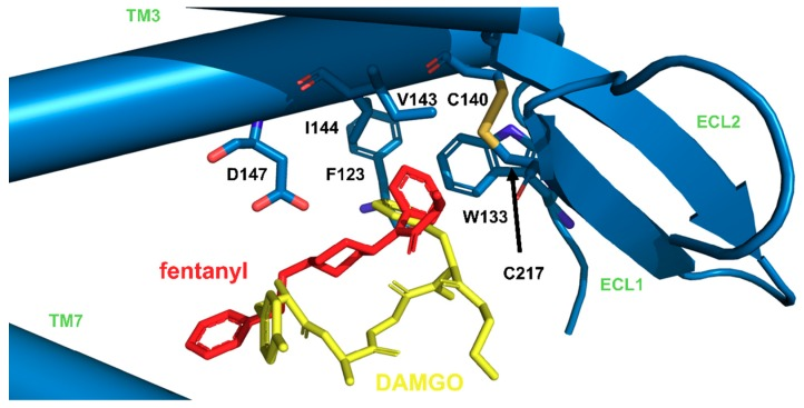 Imposition of fentanyl (red, our simulations) and DAMGO (yellow, PDB structure: 6DDF [ 53 ]) in μOR (blue), with focus on similar positioning of fentanyl anilide's phenyl and phenyl of N-Me-Phe 4 residue of DAMGO.