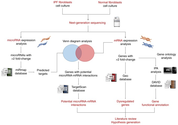 Schematic illustration of the study design. Following culture of the IPF fibroblasts and healthy lung fibroblasts, the total RNA were extracted and deep sequenced using a next-generation sequencing platform. The differentially expressed genes ( > 2 fold-change) were identified, and analyzed with IPA and DAVID for pathway analysis and functional interpretation. The GEO IPF databases were analyzed to confirm dysregulated genes identified in the present study. Conversely, the differentially expressed miRNAs ( > 2 fold-change) were analyzed with miRmap for target prediction. Then, genes with potential miRNA-mRNA interactions were determined by Venn diagram analysis. These miRNA-mRNA interactions were verified by a second miRNA prediction database, TargetScan. Finally, a literature search was performed and a hypothesis was generated. IPF, idiopathic pulmonary fibrosis; IPA, Ingenuity ® Pathway Analysis; DAVID, Database for Annotation, Visualization, and Integrated Discovery; GEO, Gene Expression Omnibus.