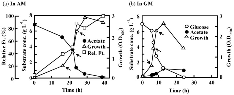 Changes in substrate concentration, growth, and relative flocculation activity (flocculation titer, Ft) during the batch cultivation of C. freundii IFO 13545 in: AM ( a ); and GM ( b ). Arrows indicate the sampling points of the cultures for qRT-PCR analysis (early-, mid-, and late-log phases in Figure 9 ).