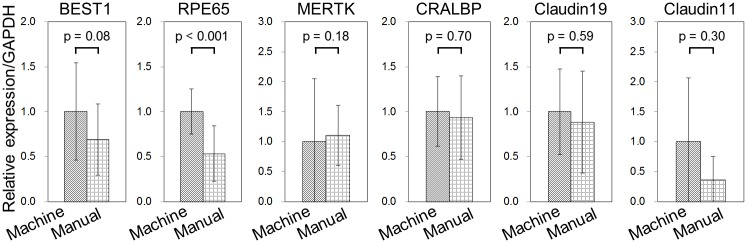 Real-time PCR analysis of RPE-related gene expression in hiPS-RPE cell sheets. Data were obtained from two independent experiments. Machine cell culture, n = 7, manual cell culture, n = 5. All data are represented as the means ± SD.