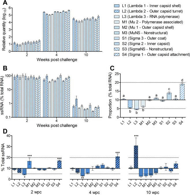 Expression of PRV segments in host blood is temporally similar but with slight proportional variation. ( A) The relative quantity (scaled to the minimum value) of each PRV RNA segment in the blood of 16-005ND challenged fish were statistically similar at 2, 4 or 10 wpc. (B) The single-stranded mRNA contribution to total PRV load was also similar between segments at each time point. However, (C) the cumulative proportional contribution of L2, L3, and M1 was significantly less, whereas S2 and S4 was significantly more, relative to all other segments independent of time (letters indicate significant groupings at p