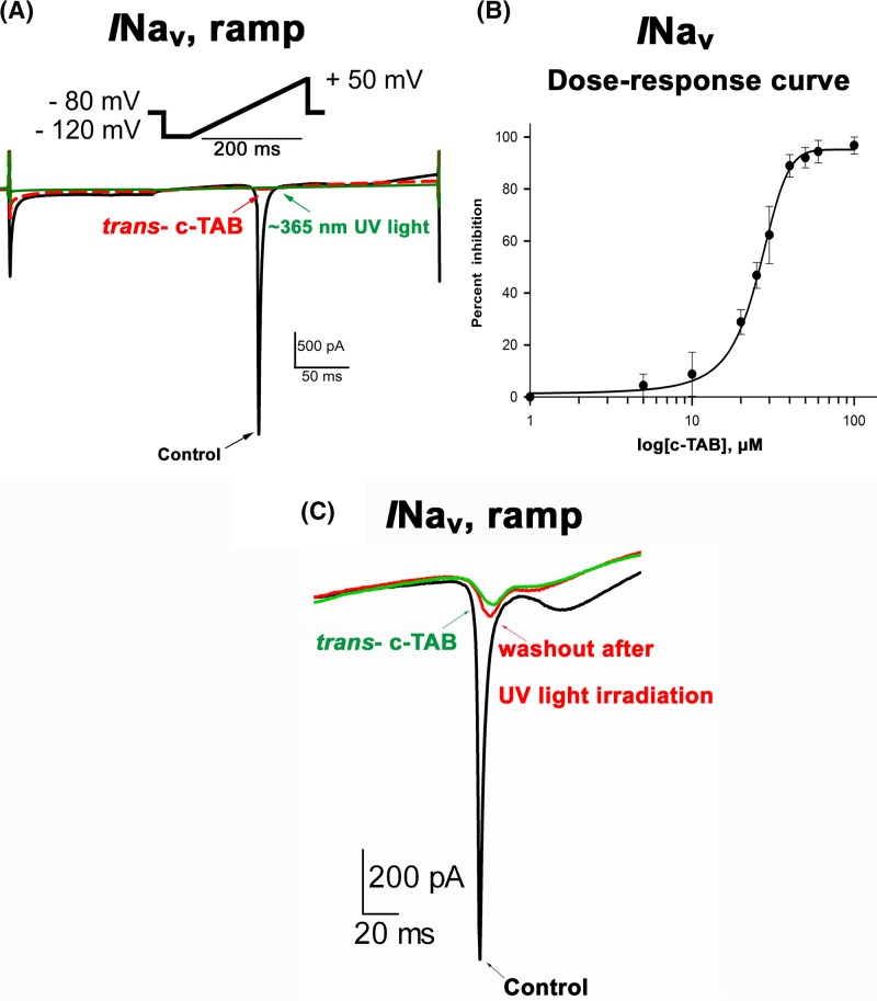 Effect of trans -c-TAB and UV-light on voltage-gated Nav current in neonatal rat ventricular myocytes ( A ) Effect of c-TAB on ramp currents in neonatal rat ventricular myocytes. Scaled ramp-evoked currents recorded in response to the same ramp protocol (from −120 to +50 mV, 200 ms) in the control and after the addition of 60 μM trans - c-TAB. Three minutes after the application, the current was inhibited by approximately 90% relative to that of the control, and it was not restored after UV irradiation (∼365 nm). Similar results were obtained in more than three additional cells. ( B ) Concentration dependency for trans - c-TAB-induced inhibition of INav in neonatal rat ventricular cardiomyocytes. Mean ± SEM, n =3–4 for each point, statistical significance was P