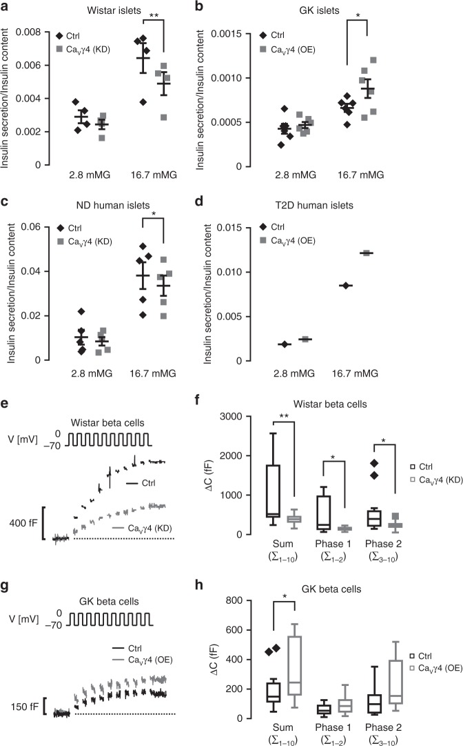 Impact of Ca V γ4 on beta-cell function. a Glucose-stimulated insulin secretion (GSIS) in Ca V γ4-silenced Wistar rat islets. n = 4, ** p = 0.006. b As in a but in Ca V γ4-overexpressed GK rat islets. n = 6, * p = 0.028. c As in a but in Ca V γ4-silenced non-diabetic (ND) human islets. n = 5 donors, * p = 0.044. d As in a but in Ca V γ4-overexpressed T2D human islets. n = 1 donor ( p = 0.008 in 16.7mMG group by six technical repeats). e Reduced depolarization-evoked (V) exocytosis in Ca V γ4-silenced Wistar rat beta cells measured as an increase in membrane capacitance (Δ C ). f A summary of data in e presented as Δ C evoked by all 10 pulses of the train (Sum), the two first pulses (Phase 1) or the latter eight pulses (Phase 2). n = 15 control and 14 Ca V γ4-silencing cells, ** p = 0.009 (Sum), * p = 0.013 (Phase 1) and * p = 0.028 (Phase 2). g As in e but rescued exocytosis in Ca V γ4-overexpressed GK rat beta cells. h Summary of data in g . n = 15 control and 16 Ca V γ4-overexpressing cells, * p = 0.042 (Sum), p = 0.07 (Phase 1), and p = 0.058 (Phase 2). Data are presented as Mean ± SEM and were analyzed with two-tailed paired ( a – c ) or unpaired ( f , h ) Student's t- test. OE overexpression, KD knockdown