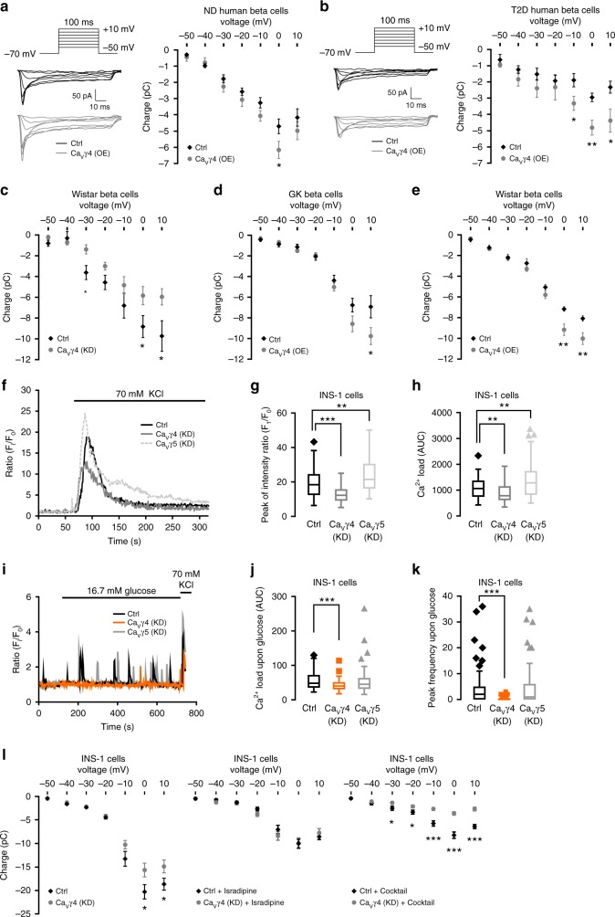 Boost of Ca 2+ influx in Ca V γ4-overexpressed beta cells. a Ca 2+ currents records in Ca V γ4-overexpressed non-diabetic (ND) human beta cells. n = 12 control and 13 Ca V γ4-overexpressing cells (4 donors), * p = 0.048. b As in a but in T2D human beta cells. n = 7 control and 8 overexpressing cells (1 T2D donor), * p = 0.032 (−10 mV), **0.004 (0 mV), *0.028 (10 mV). c As in a but in Ca V γ4-silenced Wistar rat beta cells. n = 15 control and 14 silencing cells, * p = 0.040 (0 mV), *0.034 (10 mV). d As in a but in Ca V γ4-overexpressed GK rat beta cells. n = 15 control and 14 overexpressing cells, * p = 0.047. e As in a but in Ca V γ4-overexpressed Wistar rat beta cells. n = 16 cells each, ** p = 0.003 (0 mV), **0.006 (10 mV). f Ca 2+ imaging in control, Ca V γ4, or Ca V γ5 silenced INS-1 cells. g Comparisons of [Ca 2+ ] i peak intensity (F i /F 0 ) in f , *** p
