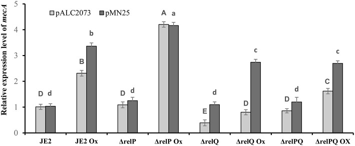 Effect of relQ expression on mecA transcription in parent and mutant strains. Transcript level was monitored by RT-PCR. cDNA was prepared by reverse-transcription of the RNA samples isolated from exponentially grown cultures treated with or without oxicillin (Ox) 4 μg/ml for 60 min in MHB. The relative expression levels were calculated using the 2 - Δ Δ C T method. Each bar shows the mean and standard deviation of values obtained from three replicates. The effect of relQ expression on mecA transcription level (lowercase letters) in different strains was analyzed by performing multiple pairwise comparisons using ANOVA followed by Tukey's post-hoc test, and p -values