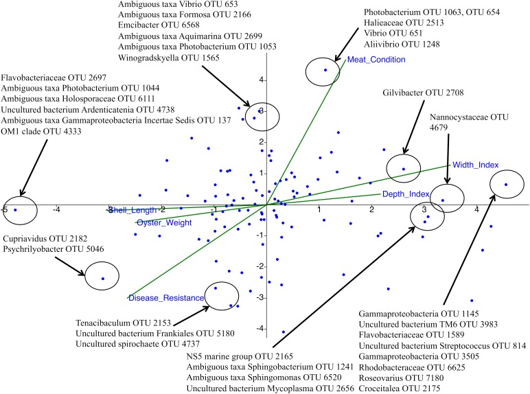 Canonical correspondence analysis (CCA) plot using 3% relative abundance filtered data. Cupriavidus , Psychrilyobacter , Tenacibaculum , and Frankiales were found to be strongly associated with OsHV-1 μvar disease-resistance, while OTUs assigned to the Photobacterium , Vibrio , and Aliivibrio were negatively associated with OsHV-1 μvar disease-resistance. Axis 1 and 2 were able to significantly represent 53.2% of the data ( p = 0.001 for both axes with 999 permutations).