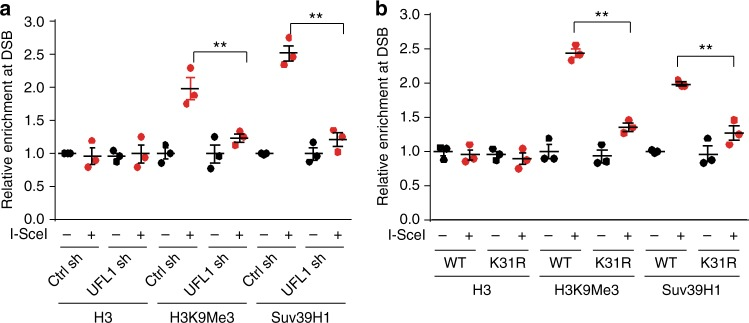 Ufmylation of histone H4 enhances trimethylation of H3K9 at DSB. a , b Analysis of H3K9 trimethylation and Suv39H1 recruitment by Chromatin IP (ChIP) at DSB sites from MDA-MB-231 ROS8 cells with indicated treatments. The y -axis represents relative enrichment of target protein binding DNA compared to input. Target sequence of UFL1 shRNA (not inducible shRNA) in a is the same as inducible sh2. The data presented are mean ± s.e.m. for n = 3 independent experiments. ** p