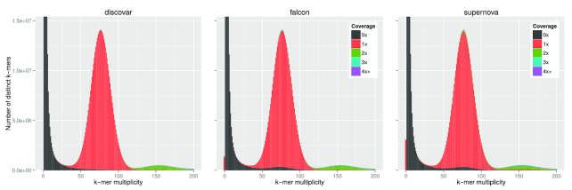 k -mer spectra plots from the k -mer Analysis Toolkit comparing three S. verrucosum <t>contig</t> assemblies. The heights of the bars indicate how many k -mers of each multiplicity appear in the raw Discovar reads. The colors indicate how many times those k -mers appear in the respective assemblies with black being zero times and red being one time. A colored bar at zero multiplicity indicates k -mers appearing in the assembly that do not appear in the reads. The Falcon assembly has been polished with the <t>Illumina</t> reads using Pilon to reduce the effect of using a different sequencing platform.