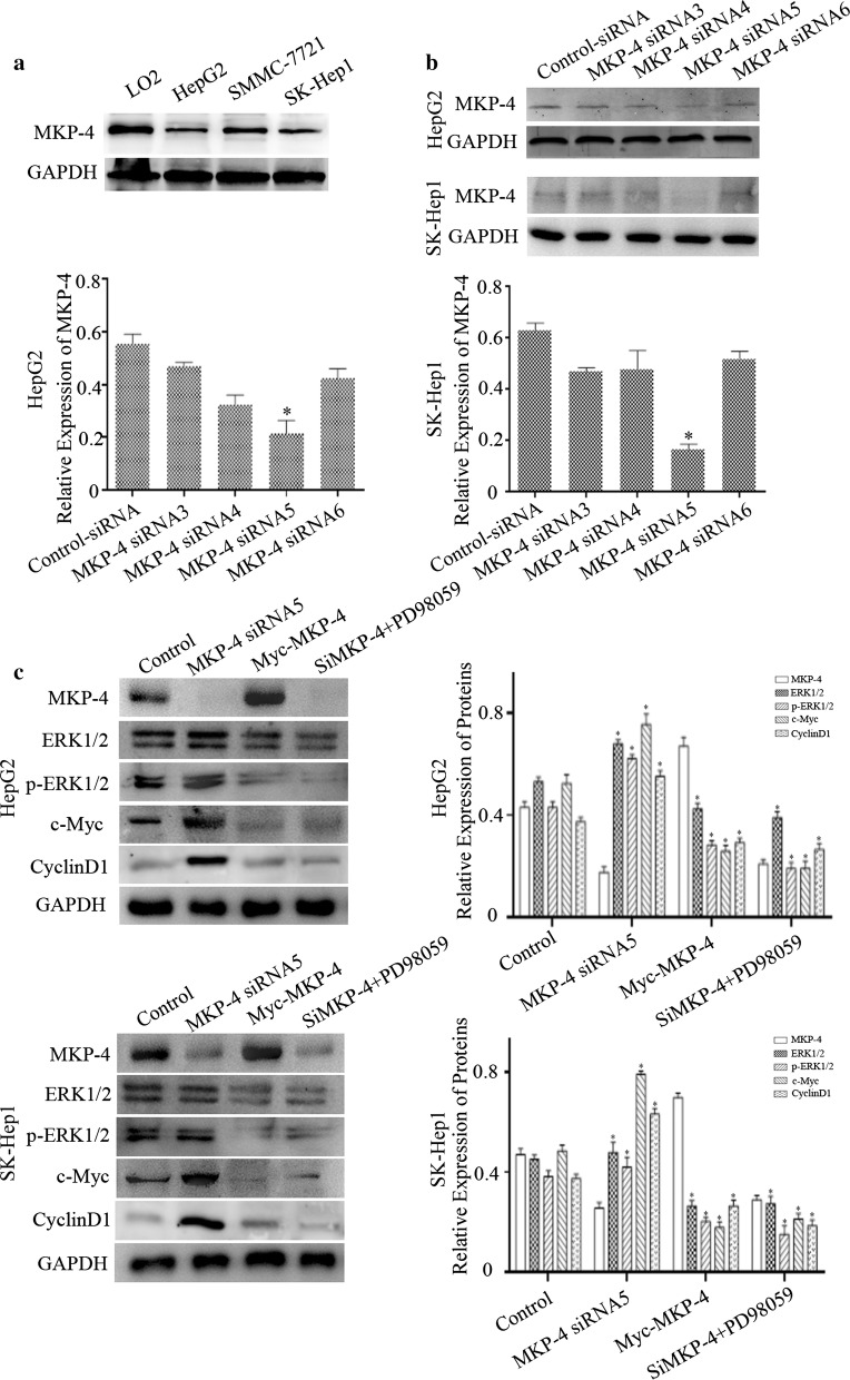 MKP-4 regulates the phosphorylation of ERK1/2 in liver tumor cells. a The expressions of MKP-4 in LO2 and different liver tumor cells were detected by using western blot. b We used RNA interference to knockdown MKP-4 expression in HepG2 or SK-Hep1 cells and chose best interfering efficiency. The bar chart demonstrated the ratio of MKP-4 expression to GAPDH by densitometry. The data were mean ± SEM of three independent experiments (* P