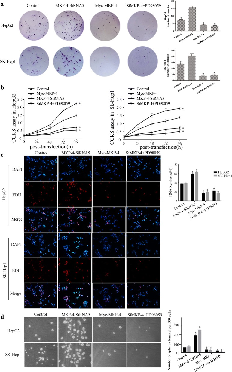 MKP-4 inhibits cell proliferation and cancer stem cell (CSC) traits through ERK1/2 pathway. a MKP-4 reduced the colony formation of HepG2 or SK-Hep1 cells via the interaction with ERK1/2. For colony formation assay, MKP-4 knockdown, MKP-4 overexpression or pre-incubation with 10 μM PD98059 by 24 h cells were seeded into each well of six-well-plate colonies and stained with crystal violet after 2 weeks. b CCK-8 assay showed that overexpression of MKP-4 or pre-incubation with 10 μM PD98059 by 24 h inhibited cell proliferation in HepG2 and SK-Hep1 cells while MKP-4 depletion promoted cell proliferation. The data are mean ± SEM of three independent experiments. (* P