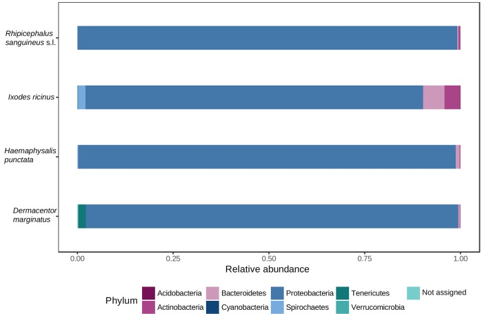 Phyla-level relative abundance of reads for each tick species analyzed. The histograms show the portion of MiSeq <t>16S</t> <t>rRNA</t> gene sequences assigned to each phylum.