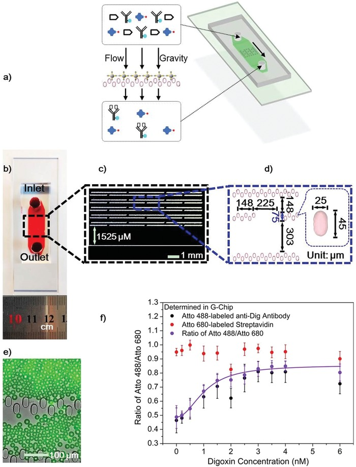 Conceptual view of the G‐Chip and digoxin detection in plasma using the G‐Chip with only 10 µL plasma. a) Schematic view of the designed G‐Chip. b) An optical image of a fabricated chip loaded with red dye. c) Conceptual view of pillar arrays inside the fluid channel. d) Conceptual view and dimensions of the integrated size‐exclusion filters (inset shows the dimensions of the pillars that compose the filters). e) The merged image of bright‐field and fluorescence image of the filters loaded with 20 µm PS–BSA–Digg beads with adsorbed Atto 488‐labeled anti‐Dig antibody. f) Normalized fluorescence intensity of 0.42 n m Atto 488‐labeled anti‐Dig antibody (black dots) and 7.58 n m Atto 680‐labeled streptavidin (red dots) in diluted plasma, and the corresponding signal ratio (purple dots) at various digoxin concentrations. The sample consisting of plasma mixed with labeled antibodies is diluted 1:7 before entering the G‐Chip. However, the concentrations given in (f) are of digoxin in plasma before dilution. All used PS–BSA–Digg beads are recycled beads. Plotted values are mean values with standard deviations ( N = 3).