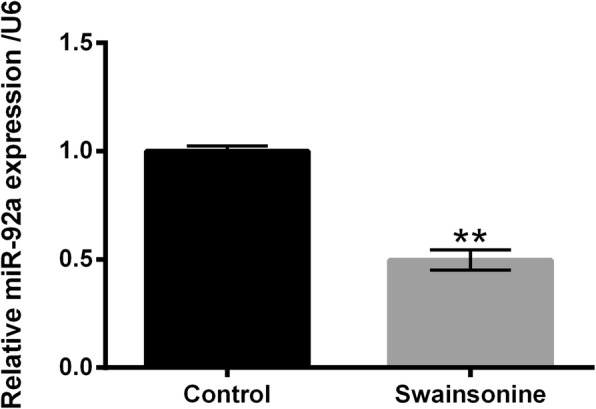 Swainsonine repressed miR-92a expression in U251 cells. After disposing with 30 μM Swainsonine for 12 h, miR-92a expression was analyzed by utilizing quantitative real-time polymerase chain reaction (qRT-PCR) assay in U251 cells. ** p