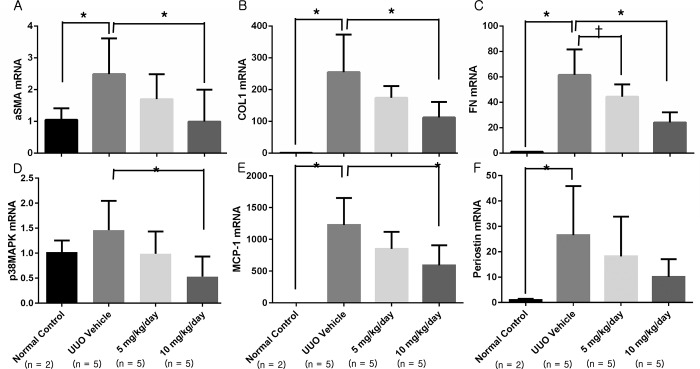 Fibrosis-related mRNA expression as assessed with RT-PCR. (A) Expression of αSMA was decreased in the 10 mg/kg/day p38 MAPK inhibitor group. (B) Expression of COL1 was decreased in the 10 mg/kg/day p38 MAPK inhibitor group. (C) Expression of fibronectin was decreased in the 5 and 10 mg/kg/day p38 MAPK inhibitor groups, with a dose-dependent pattern. (D) Expression of p38 MAPK was decreased in the 10 mg/kg/day p38 MAPK inhibitor group. (E) Expression of MCP-1 was decreased in the 10 mg/kg/day p38 MAPK inhibitor group. (F) The decrease in periostin expression was not statistically significant. αSMA, α-smooth muscle actin; COL1, type 1 collagen; MCP-1, monocyte chemoattractant protein-1; UUO, unilateral ureteral obstruction. *, P