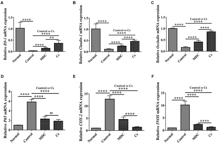 Real-time quantitative PCR detection of ZO-1 mRNA (A) , Claudin-1 mRNA (B) , Occludin mRNA (C) , P65 mRNA (D) , COX-2 mRNA (E) , and INOS mRNA (F) in colon of 4 groups. Values are means ± SEMs, n = 6. ∗∗ p ≤ 0.01, ∗∗∗∗ p ≤ 0.0001, ns, no significant difference.