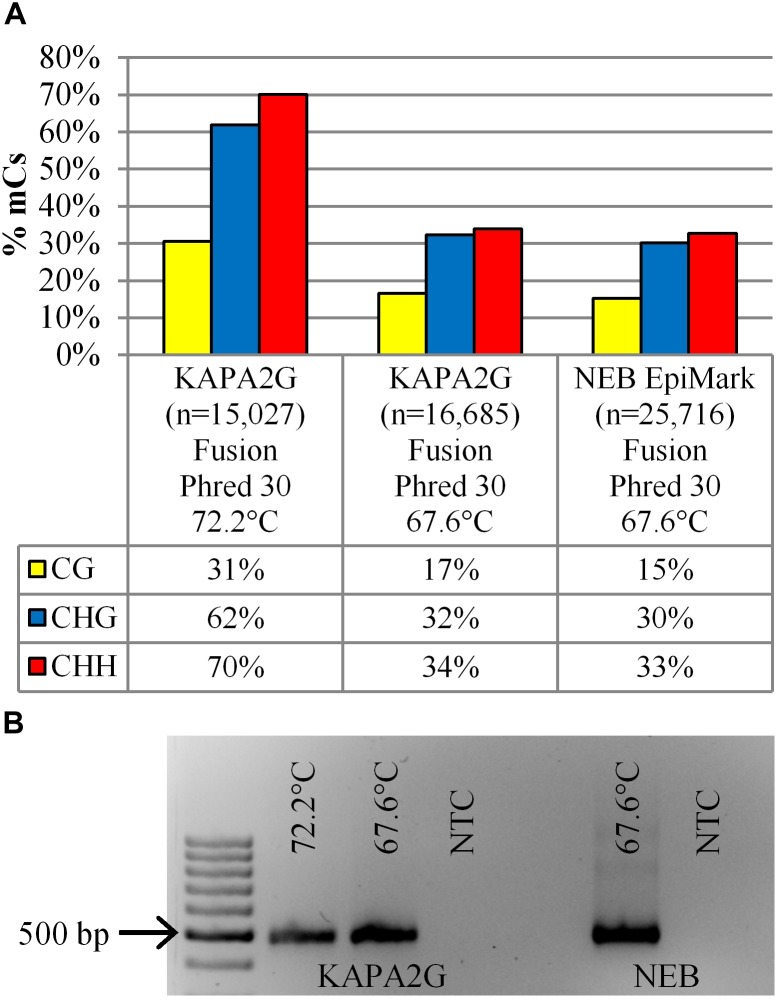 (A) The percentage of methylated cytosines (% mCs) is presented for the 14 dpi 35S-eGFP+hp sample sequenced on the Illumina MiSeq with the fusion protocol. Comparisons are amongst the DNA polymerases (KAPA2G and NEB EpiMark) and extension temperature used during the bisulfite PCR; n = number of reads used from one infiltrated leaf to build the profile after quality and length filtering. (B) Gel electrophoresis showing amplification intensity of the same sample used to generate the methylation profile in (A) ; NTC, no template control. 100 bp DNA Ladder (GeneRuler).