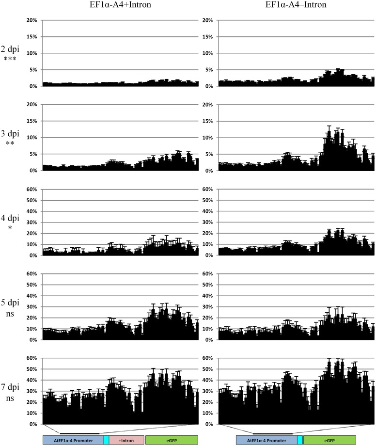 Methylation analysis comparison in the time course of the AtEF1α-A4 promoter with (left panel) or without the 5′ UTR intron (right panel) regulating the expression of eGFP . Percentage cytosine methylation is presented on the y-axis and individual cytosine positions in the 546 bp region indicated by the black bar on the x-axis. Sequencing was carried out on the Illumina MiSeq with the fusion protocol, n = three biological replicates. General linear model (two-way ANOVA) followed by the Tukey test was used to compare all cytosine contexts between the two treatments at each time point. Statistically significant differences, ns not significant, ∗ P