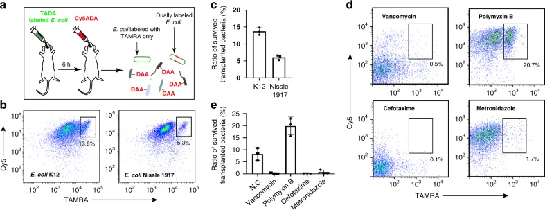 Evaluation of the survival of specific bacteria, and the antibiotic preconditioning effects. a Schematic showing the experimental procedures for assessing the viability of E. coli during transplantation using STAMP. b Flow cytometry analysis of the transplanted E. coli strains K12 (left) and Nissle 1917 (right). The inserted numbers indicate the survival rates. c Statistical analysis of the survival rates of transplanted E. coli K12 and Nissle 1917. Mean ± s.d. are presented for n = 3. d Flow cytometry analysis of the STAMP-labeled gut microbiota from recipient mice with preconditioning of vancomycin, polymyxin B, <t>cefotaxime,</t> or metronidazole. The inserted numbers indicate the survival rates. e Statistical analysis of the survival rates of the transplanted microbiotas from recipient mice with antibiotic preconditioning. Mean ± s.d. are presented for n = 3