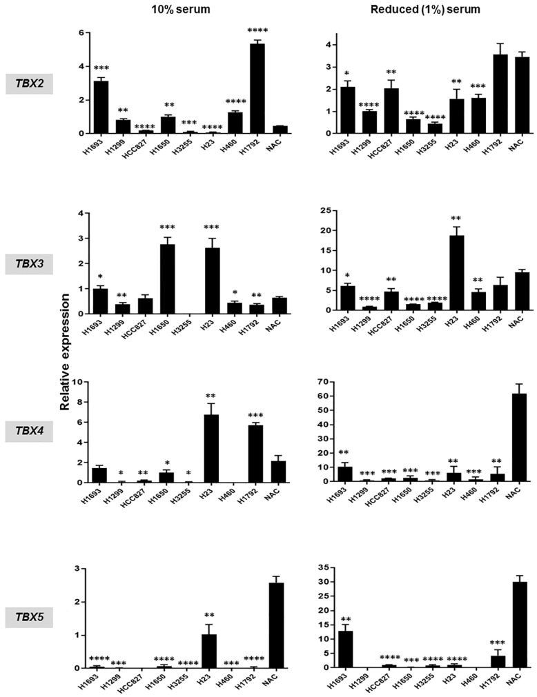 Suppressed expression of TBX2 subfamily in non-small cell lung cancer (NSCLC) cell lines relative to normal pulmonary alveolar epithelial cells. Messenger RNA expression levels of all four members of TBX2 subfamily in NSCLC cell lines compared to normal pulmonary alveolar epithelial cells (NAC) were analyzed in triplicates by qRT-PCR. Analysis was performed on NSCLC cell lines grown in serum-containing medium (10% FBS; left panels) as well as on cells maintained in media with reduced serum (1% FBS; right panels). Relative expression data in each of the NSCLC cell lines and for each of the TBX genes were computed using the 2 −ΔΔ C t calculation method by normalization to glyceraldehyde 3-phosphate dehydrogenase (GAPDH) and are presented as mean ± SEM (* p