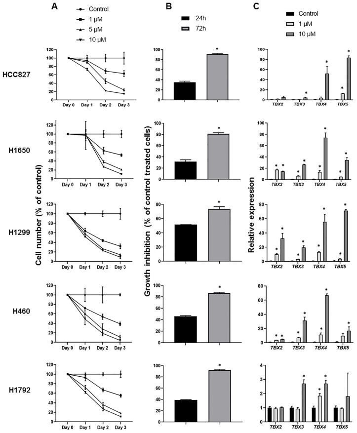 Augmented expression of the TBX2 subfamily in NSCLC cell lines treated with the DNA methyltransferase 5-azacytidine. ( A ) 3-(4,5-dimethylthiazol-2-yl)-2,5-diphenyltetrazolium bromide (MTT) assays were performed to assess cellular proliferation as described in Section 4 . Cells were seeded in 96-well plates, at varying seeding densities following optimization, and treated with differing doses of Aza or dimethyl sulfoxide (DMSO) as control for 24, 48 and 72 h. Aza treatment was prepared and replenished every day as per previous reports [ 14 ]. Cell numbers (% of control) were determined by MTT assays and represent percentages of absorbance readings from Aza-treated cells (at each dose) versus DMSO-treated cells. Data depicted represent means ± standard deviations. ( B ) The same NSCLC cell lines were seeded in 96-well plates and treated according to IC50s (1 µM) for 24 h and 72 h. Assessment of growth inhibition was performed using the trypan blue dye exclusion method as detailed in Section 4 . Growth inhibition was calculated according to the following formula: 100 − (treated/non-treated) × 100). Data depicted comprise the means ± SEM of two independent experiments (* p